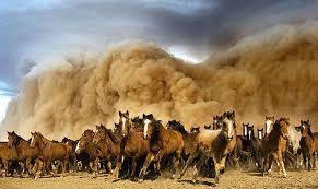 downloadstampede horses